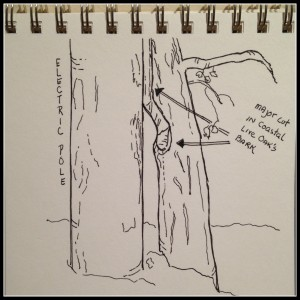sketch with frame