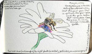 bee final with corners