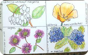 native plants 1 round corners